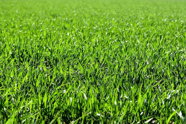 Best Grass Type For Central New York Lawns