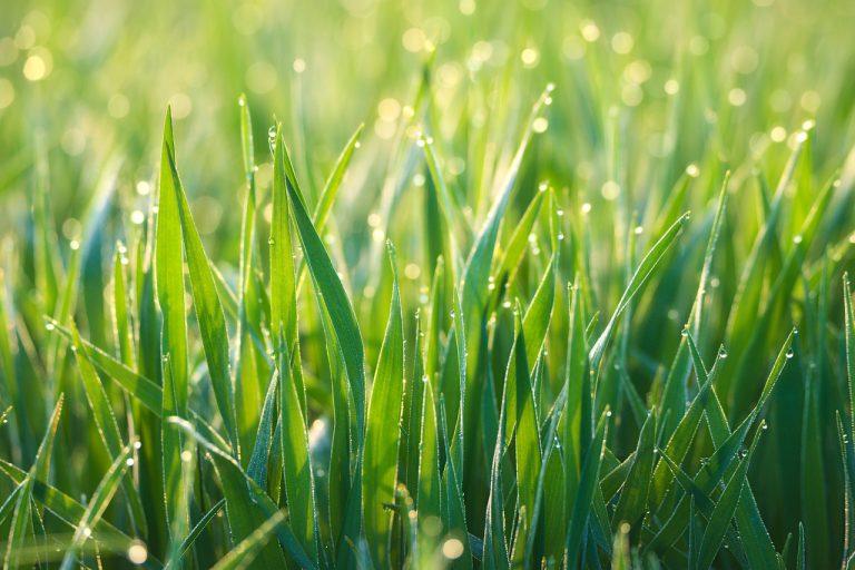 Can You Cut Grass In The Rain