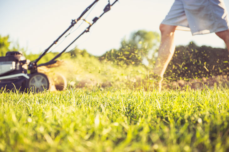 Should I leave Grass Clippings On Lawn Or Bag